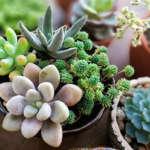 Consejos clave para el cuidado de plantas suculentas