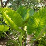 El sosiego de las plantas en casa