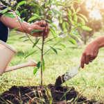 7 razones para plantar un árbol