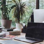 ¿Quieres refrescar tu oficina? 5 plantas que te ayudarán a transformarla