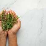Cómo preparar jarabe de romero contra los dolores de cabeza